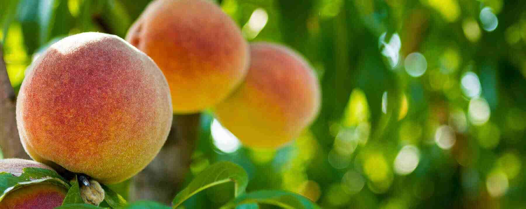 Peach & Pancakes