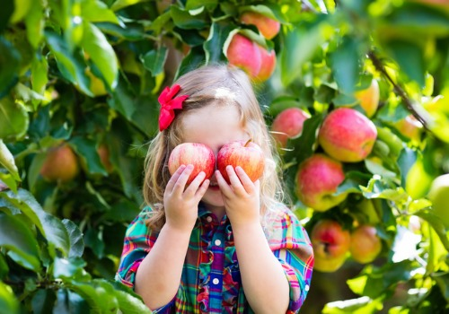 A young girl enjoying apple picking and other kids activities near Peoria IL