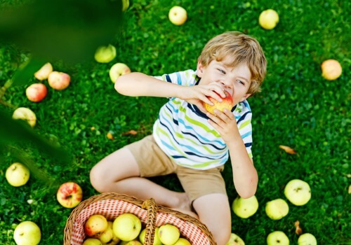 A little boy enjoying apple picking and other Kids Activities near Bloomington IL
