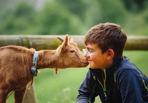 A young boy enjoying a petting zoo and other Kids Activities near Galesburg IL