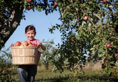 Apple Picking Farm Bloomington IL