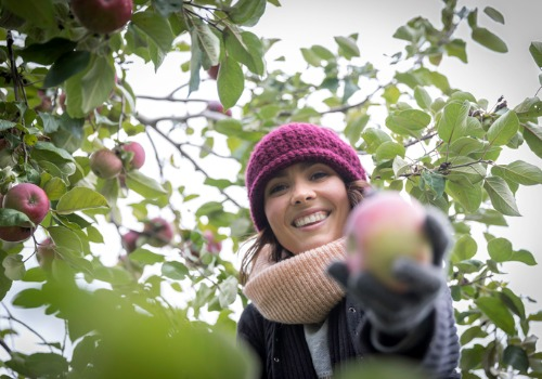 Woman in warm clothes enjoying apple picking in Peoria IL