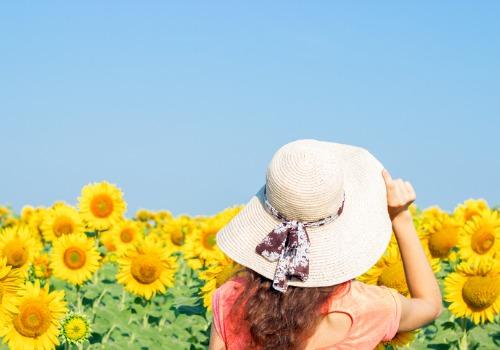 Sunflower Festival Peoria IL