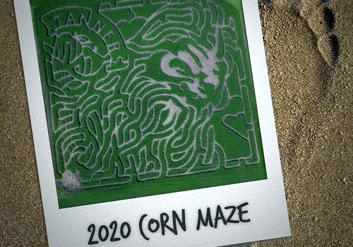 Polaroid Picture of 2020 Corn Maze. The maze is a designed in the shape of bigfoot, and the photograph rests on top of a footprint in the sand.