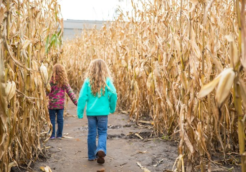 Two Girls with curly blonde hair walk through a yellow corn maze